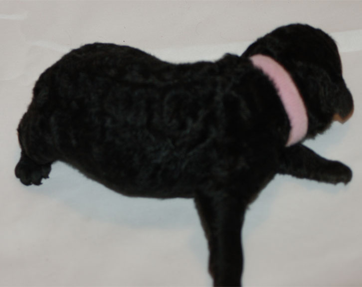 Minnie – Adopted