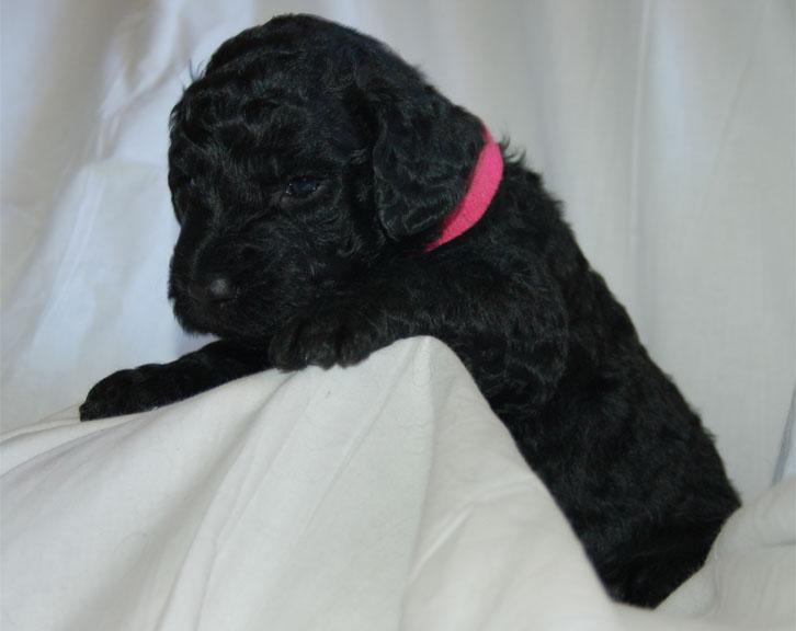 Pearl – F1B – Adopted