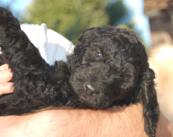 Mickey – Black/SilverFrost – Adopted