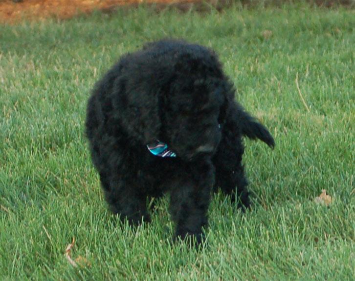 Toodles (KAI)- F1B – Adopted