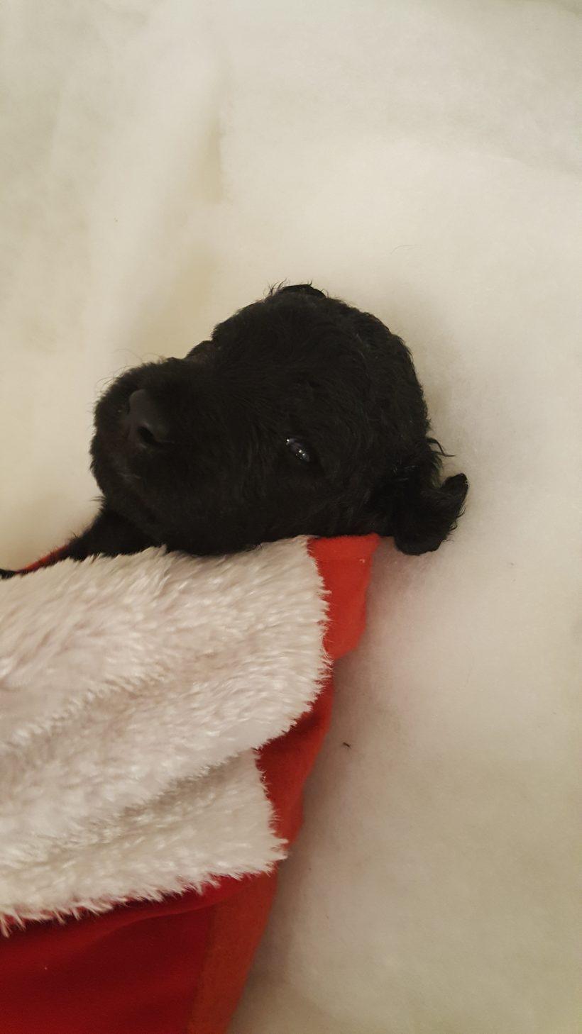 Blitzen – F1B – Adopted