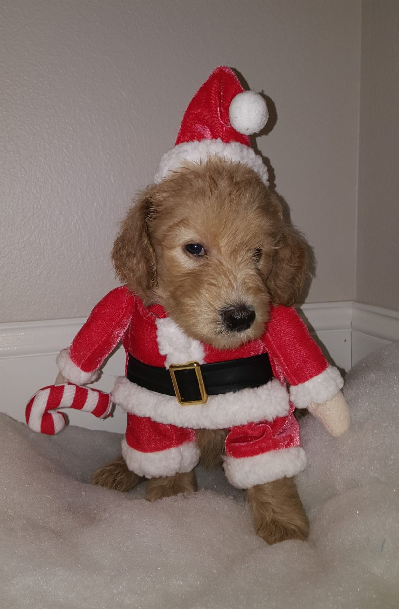 Rudolph – F1B – Adopted