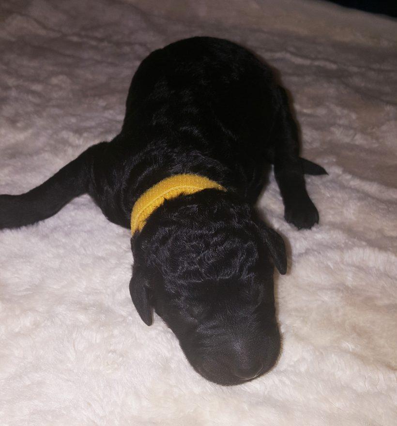 Vixen – F1B – Adopted