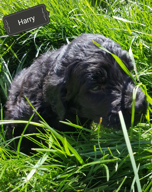 Harry Pupper – F1b – Adopted