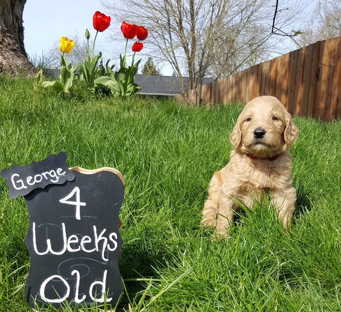 George Weasly – F1b – Adopted