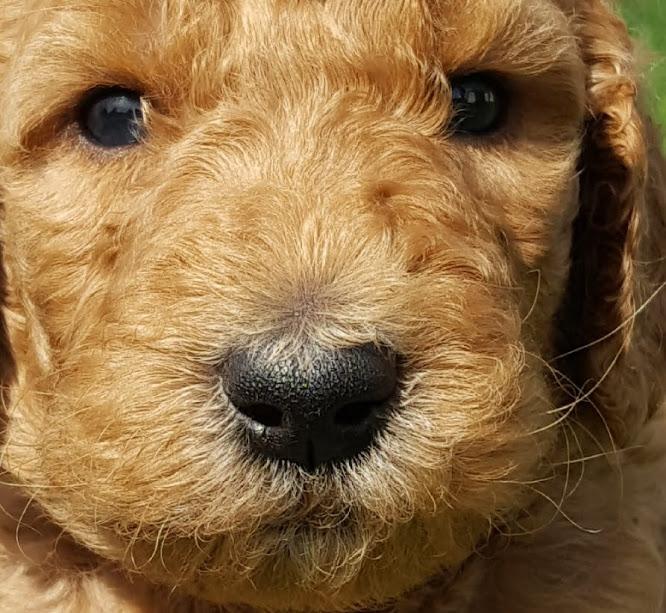 Fred Weasly – F1b – Adopted