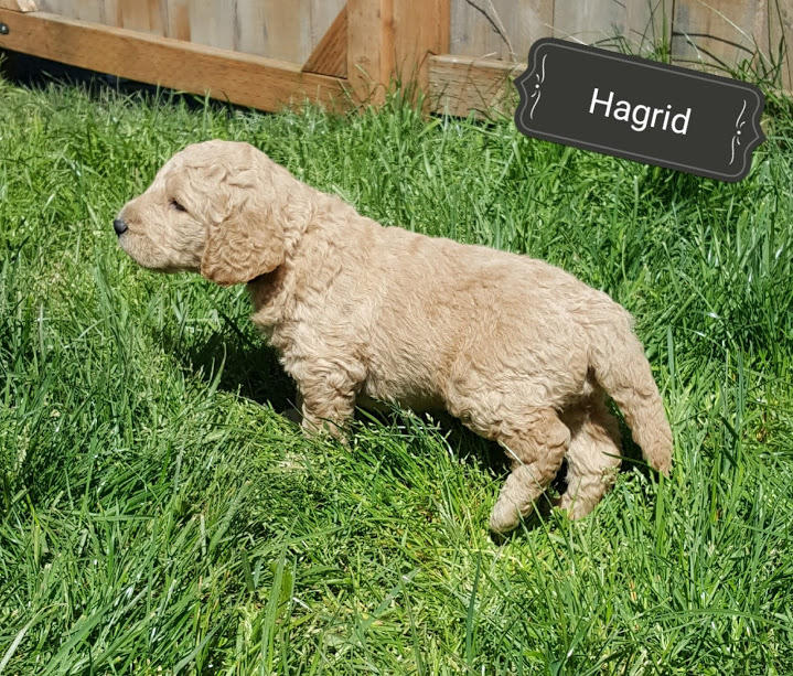Hagrid – F1b – Adopted