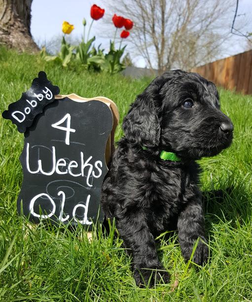 Dobby – F1b – Adoped