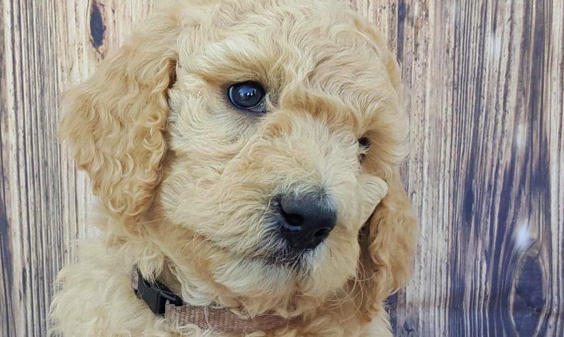 Joy – F1B – Adopted